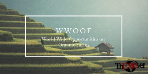 WWOOF – World Wide Opportunities on Organic Farms