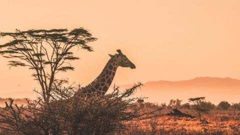 Mumbai to Johannesburg round-trip for ₹25086 ($351)